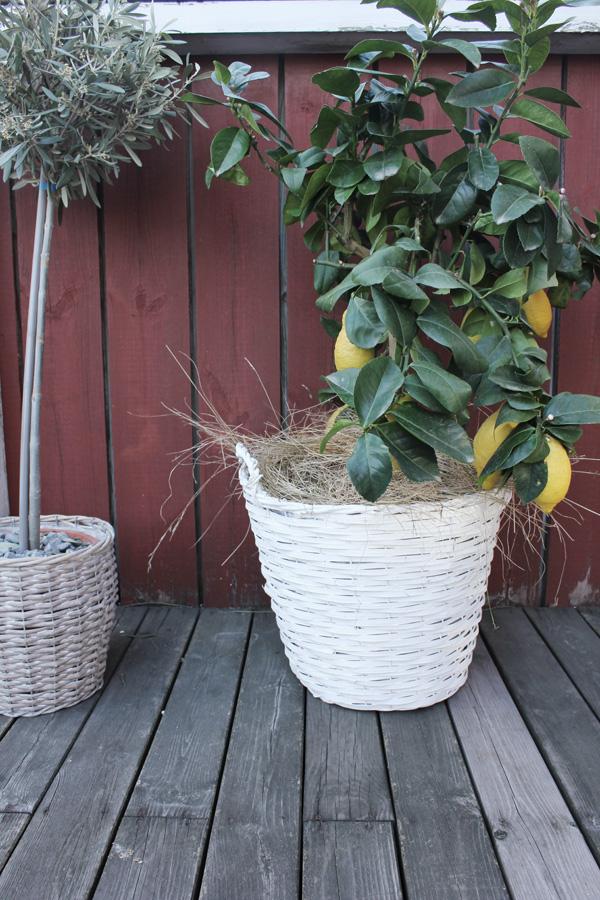 Дом в Швеции с приусадебным участком