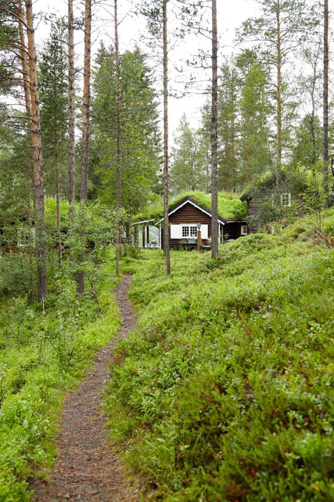 Коттедж в лесу в Норвегии